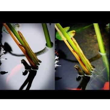 Circular Polarizing filter for Canon LEGRIA HF S200